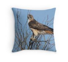 Red-Tailed Hawk ~ Grasping for branches........ Throw Pillow