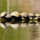 Fourteen Turtles on a Log by Joe Jennelle