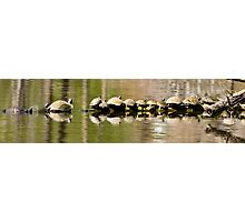 Fourteen Turtles on a Log Photographic Print
