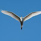 Backlit Great White Egret by Joe Jennelle