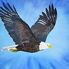 Bald Eagle in flight by maggie326