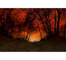 Sunset trees at Sleeping Bear Dunes Photographic Print