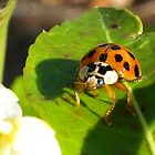 Little Lady Dusted with Pollen by Kate Eller