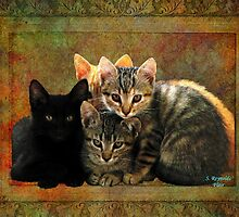 Four Kitty Pile-up by Stephanie Reynolds