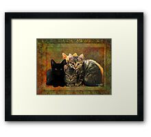 Four Kitty Pile-up Framed Print