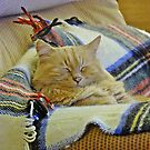 """"""" All this sleeping makes me tired"""" by mrcoradour"""