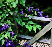 "Flower Power! Purple Clematis by Christine ""Xine"" Segalas"