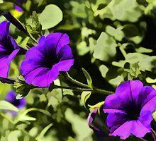 """Flower Power! Purple Petunias by Christine """"Xine"""" Segalas"""