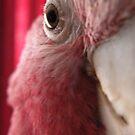 I'm watching you...... by supernan