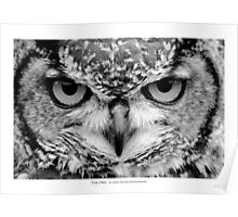 """The Owl"" - Black and White Portrait Poster"