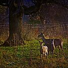 Three Deer by swaby