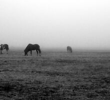Horses in Field of Fog by Tracy Engle