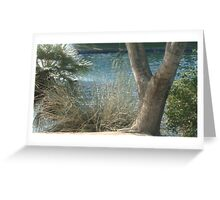 NATURAL BEAUTY- BEAUTY OF WATER & TREES Greeting Card