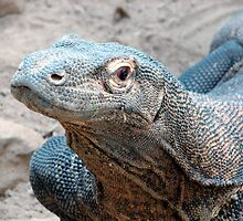 The Face of a Komodo by Tracy Engle