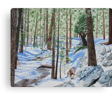 WINTER IN THE SAN JACINTO MOUNTAINS Canvas Print
