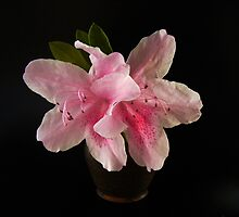 TINY FLOWER VASE by gracestout2007