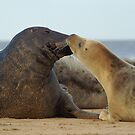 Sealed with a kiss (Donna Nook, Lincs) by Cliff Williams