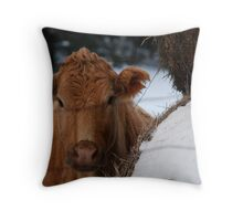 How Now... Brown Cow... Throw Pillow