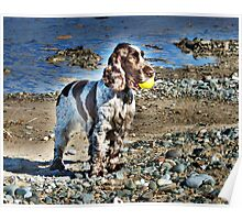 Fun on The beach. Poster