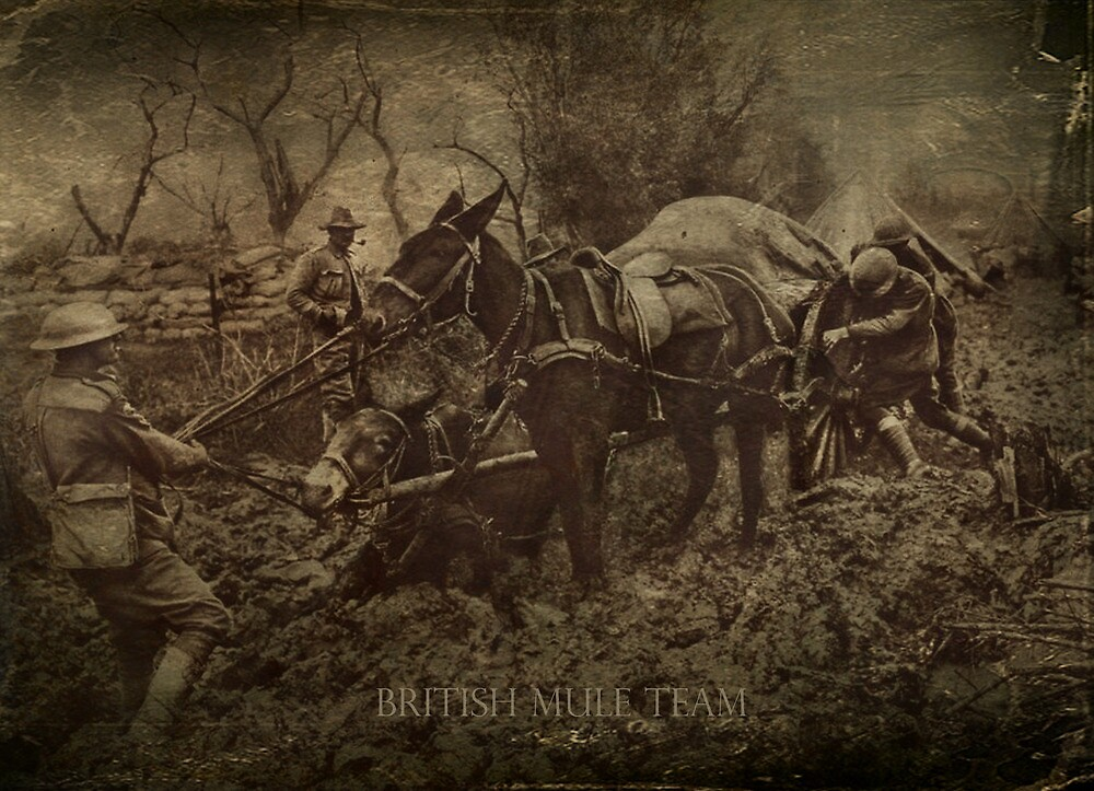 British Mule Team by garts