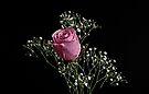 Pink Rose by Sandy Keeton