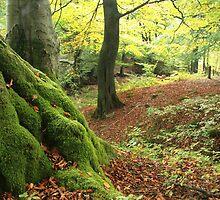 Mossy tree trunk by Jane Corey