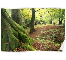 Mossy tree trunk Poster