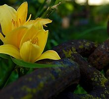 Yellow Flowers and a Mossy Chain by kyleO