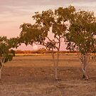 Outback Moonrise - Western Queensland by Simon Bennett