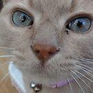 A Feline beauty by neon-gobi