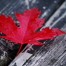 I AM CANADIAN by Diane Blastorah
