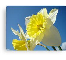 Spring Sunny Daffodil Flower Blue Sky art Baslee Troutman Canvas Print