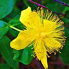 Yellow Flower2 by the57man