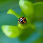 Ladybug by JennyLee