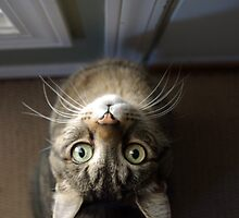OUT PLEASE! by Sheri Bawtinheimer