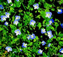 Are These Forget-Me-Nots??  NO... HA by Debbie Robbins