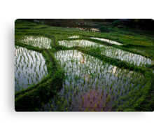 Dusk In The Rice Paddies Canvas Print