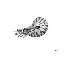 Nautilus by SVaeth
