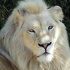 WHITE LION @ NATIONAL ZOO & AQUARIUM by briangardphoto