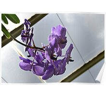 Hanging orchids at the Conservatory Poster