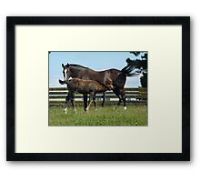 Mother & Foal Contentment Framed Print