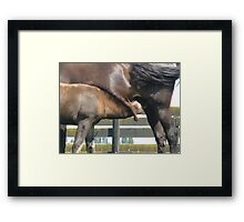 Mare & Foal Abandonment Framed Print