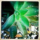 Succulent by Marita