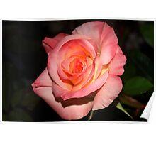 Joyful rose Poster