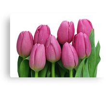Pink Tulip Bouquet with Water Droplets Canvas Print