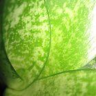 green by emmamalapo