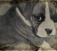 Rocky the Puppy in Black & White by Vanessa Barklay