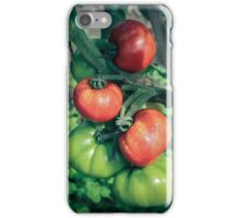Tomatoes Ripening from the branches iPhone Case/Skin