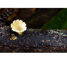 Fungi Season 1102 Photographic Print