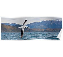 Wandering Albatross - New Zealand Poster